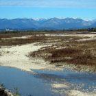 L'oasi del Codibugnolo