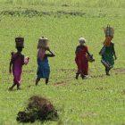 Orissa, l'India tribale