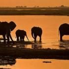 Zimbabwe, il paradiso dell'Africa