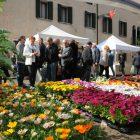 """""""Noale in Fiore"""": molto più di una mostra mercato"""